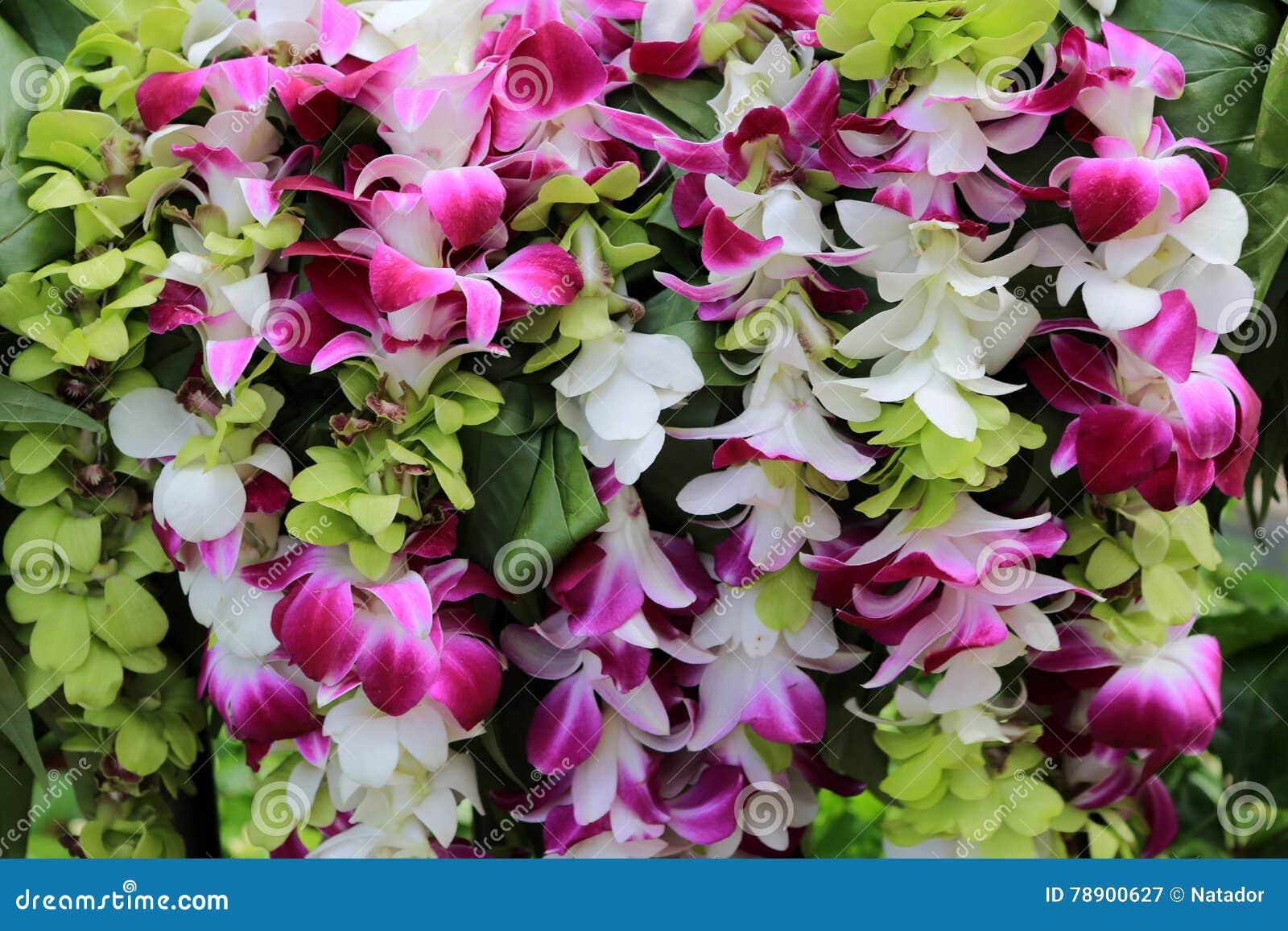 Hawaiian orchid lei stock image image of leaves plant 78900627 hawaiian orchid lei izmirmasajfo