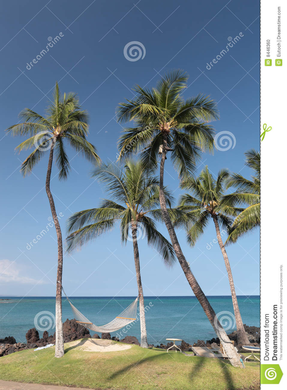 hawaiian paradise island palms - photo #33
