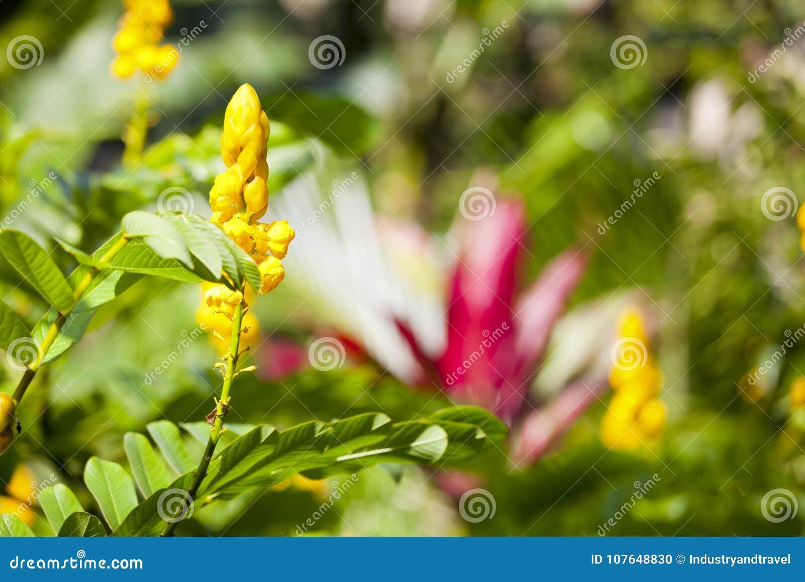 Hawaiian Tropical Flowers Maui Stock Photo Image Of Beauty