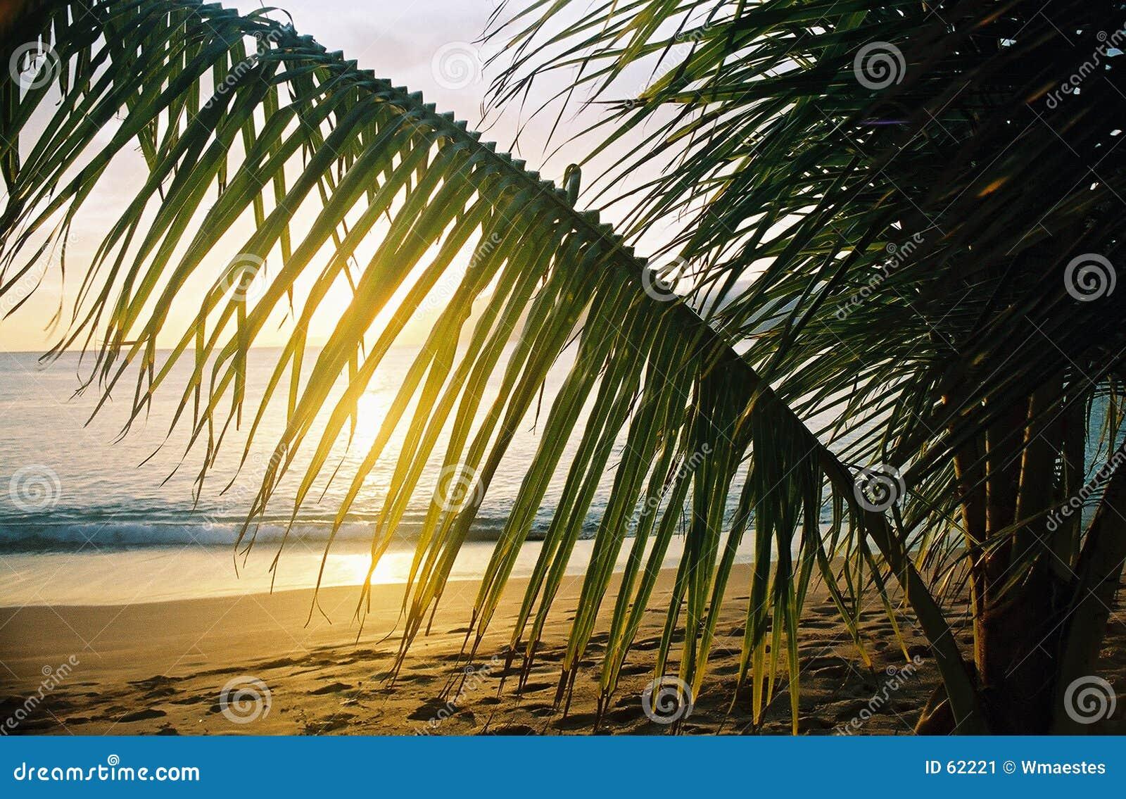 Hawaiibon gömma i handflatan