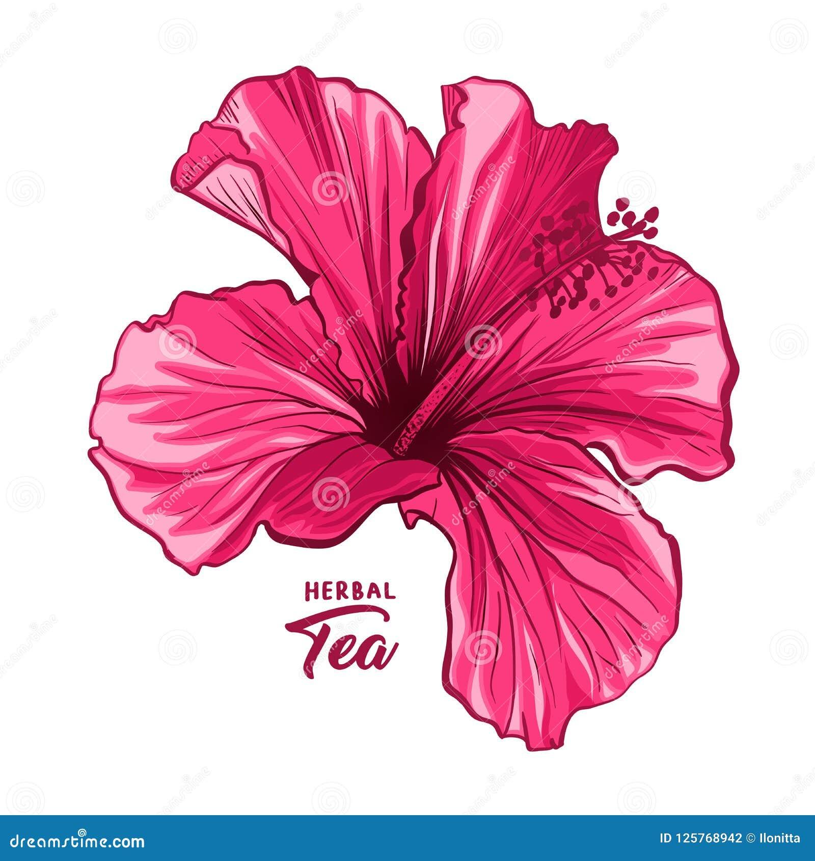 Hawaiische Hibiscus-Duft-Blume oder Malve rosa Rose Flora und Anlage