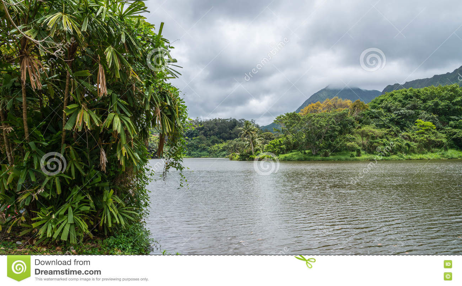 Hawaiischer Regen-Wald im Koolaus