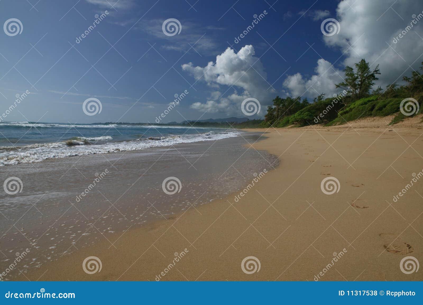 Hawaiisches tropisches Traumstrand-Paradies