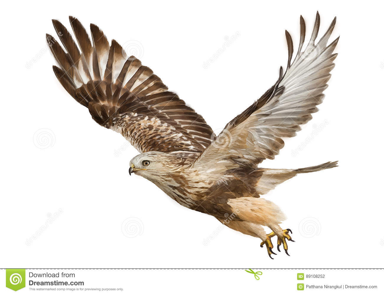 hawk flying hand draw and paint color vector