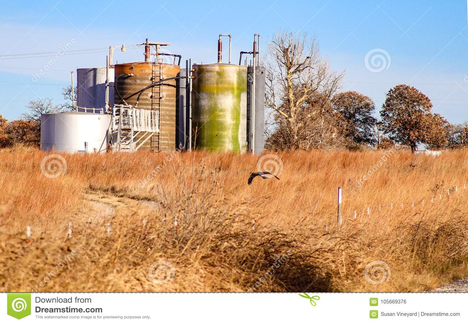 Hawk los ratones de la caza en campo marrón delante del agua-aceite knockout del agua libre que separa los tanques contra árboles
