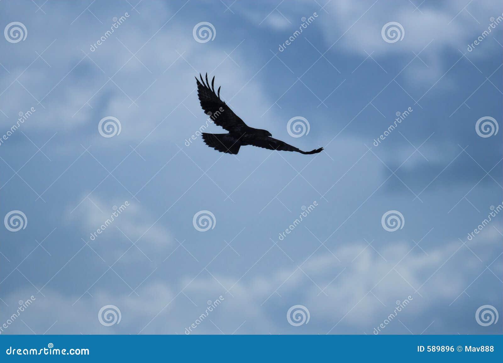 Hawk silhouetteFlying Hawk Silhouette