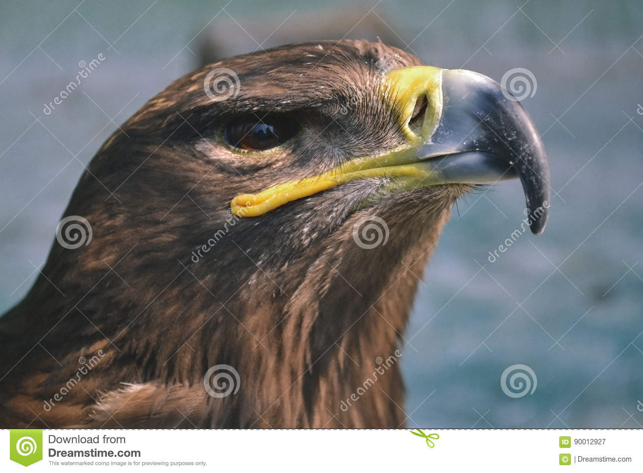 Hawk is similar to the Eagle. The birds of prey as well.