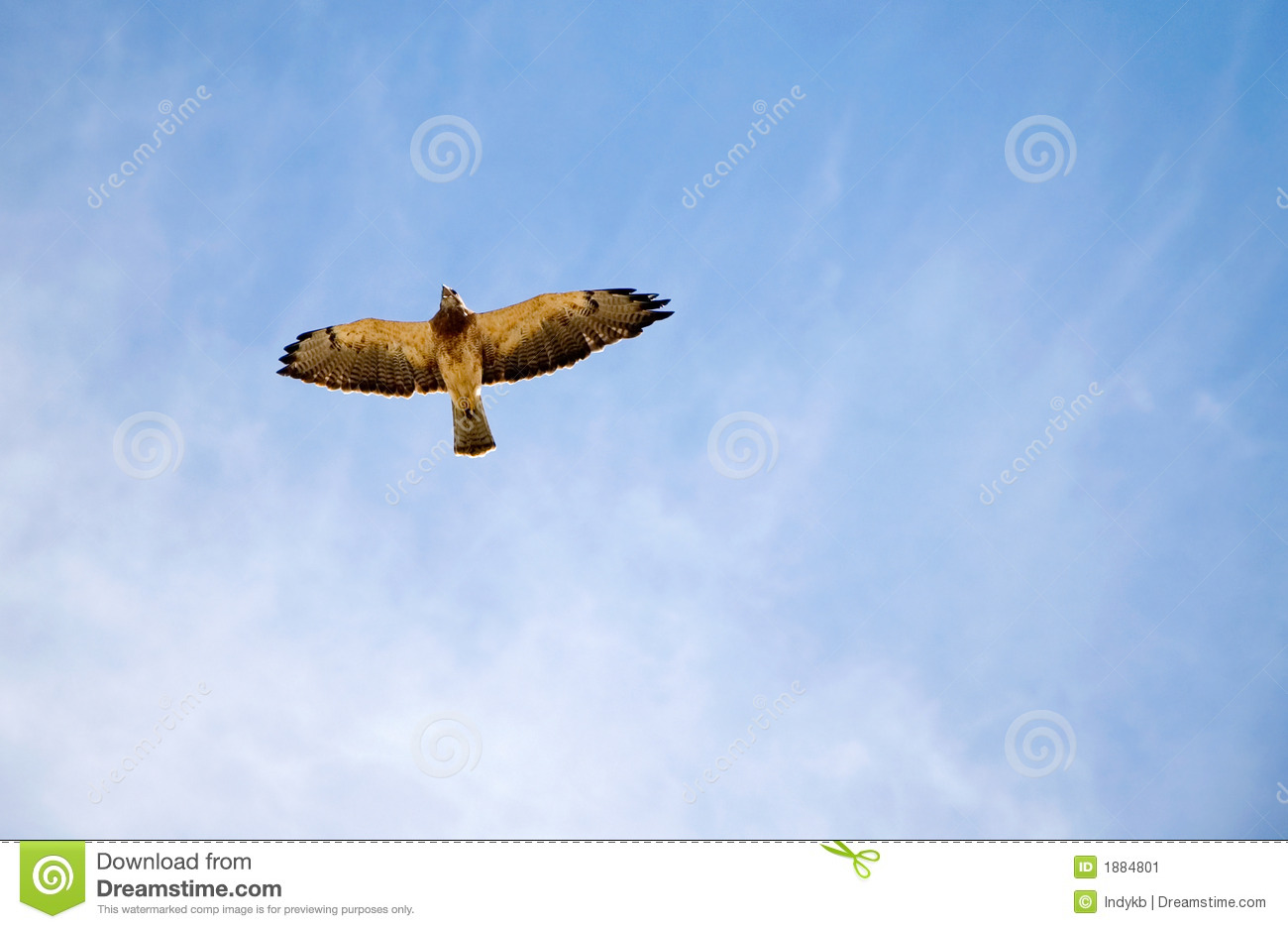Hawk In The Sky Stock Image - Image: 1884801