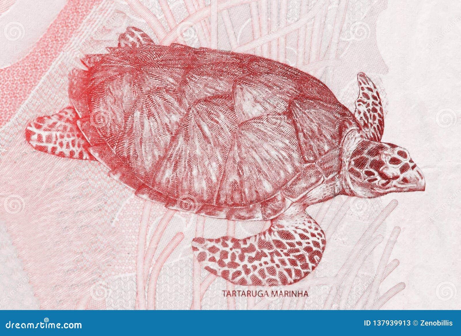 Hawksbillzeeschildpad op het fragment van twee Braziliaans echt bankbiljetclose-up