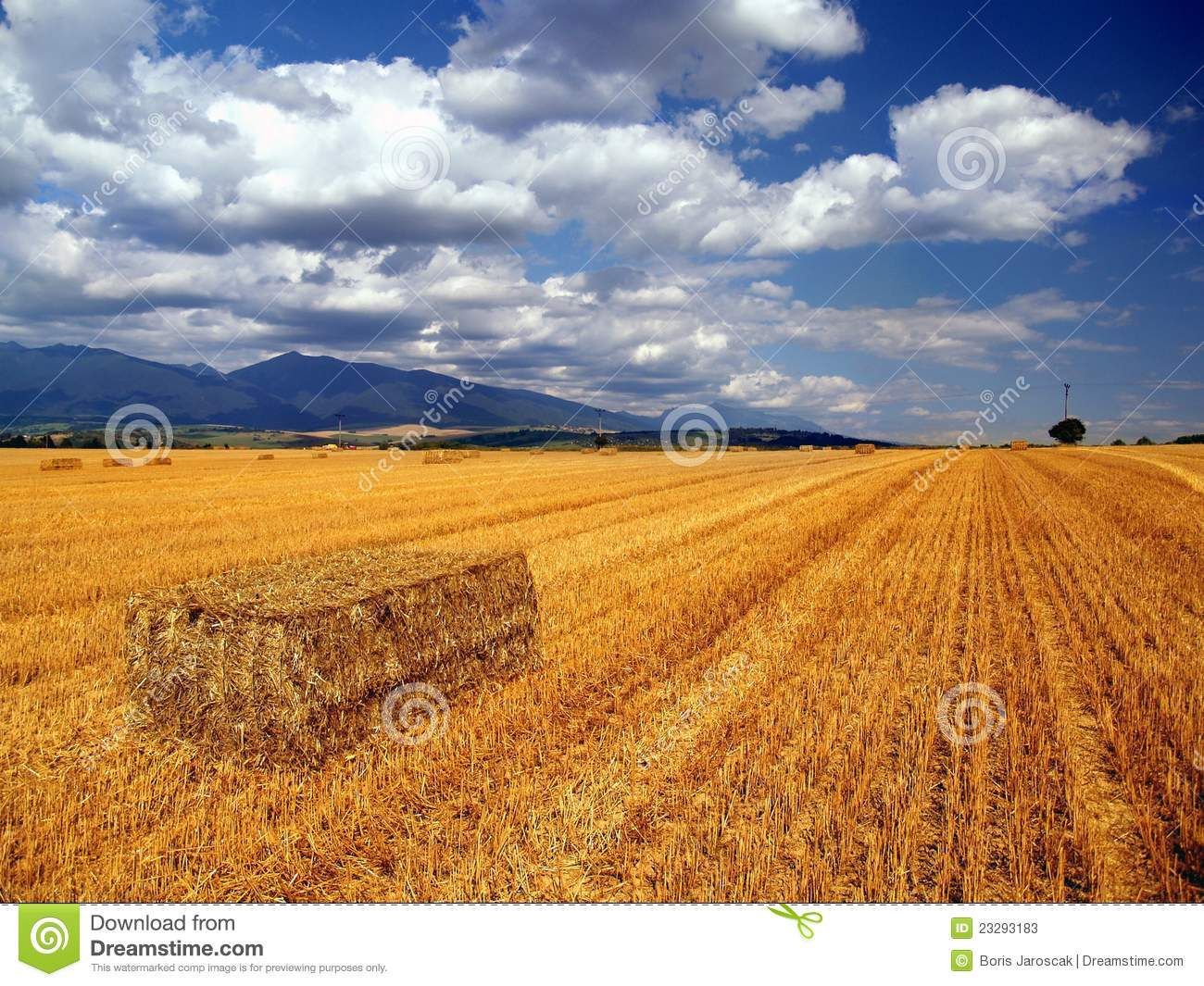 Hay bales in countryside