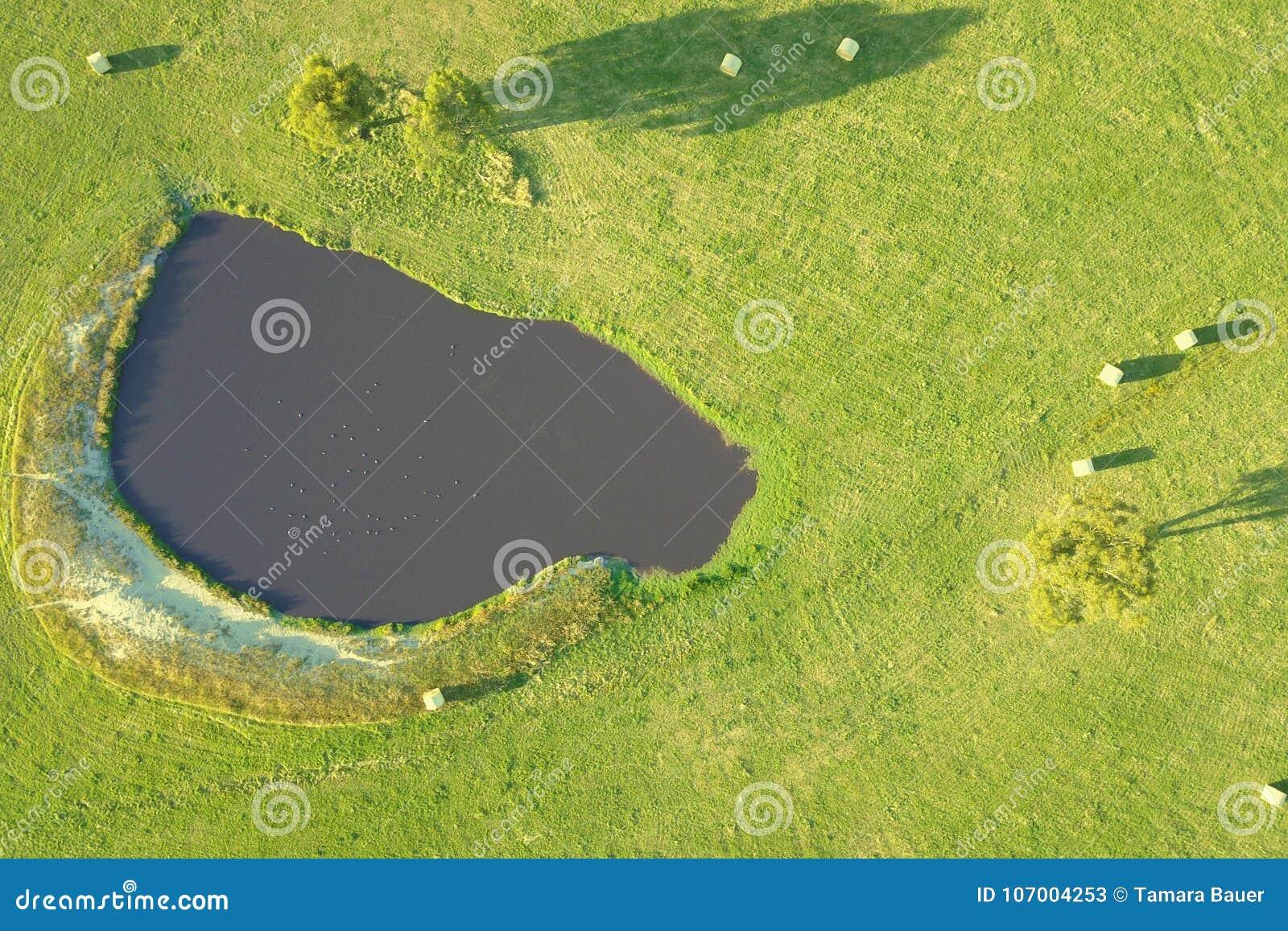 Hay bales on farmland in South Gippsland