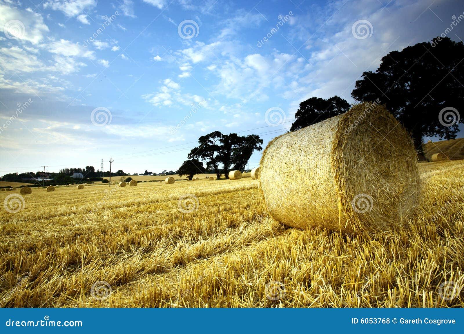 Hay bales in rural landscape