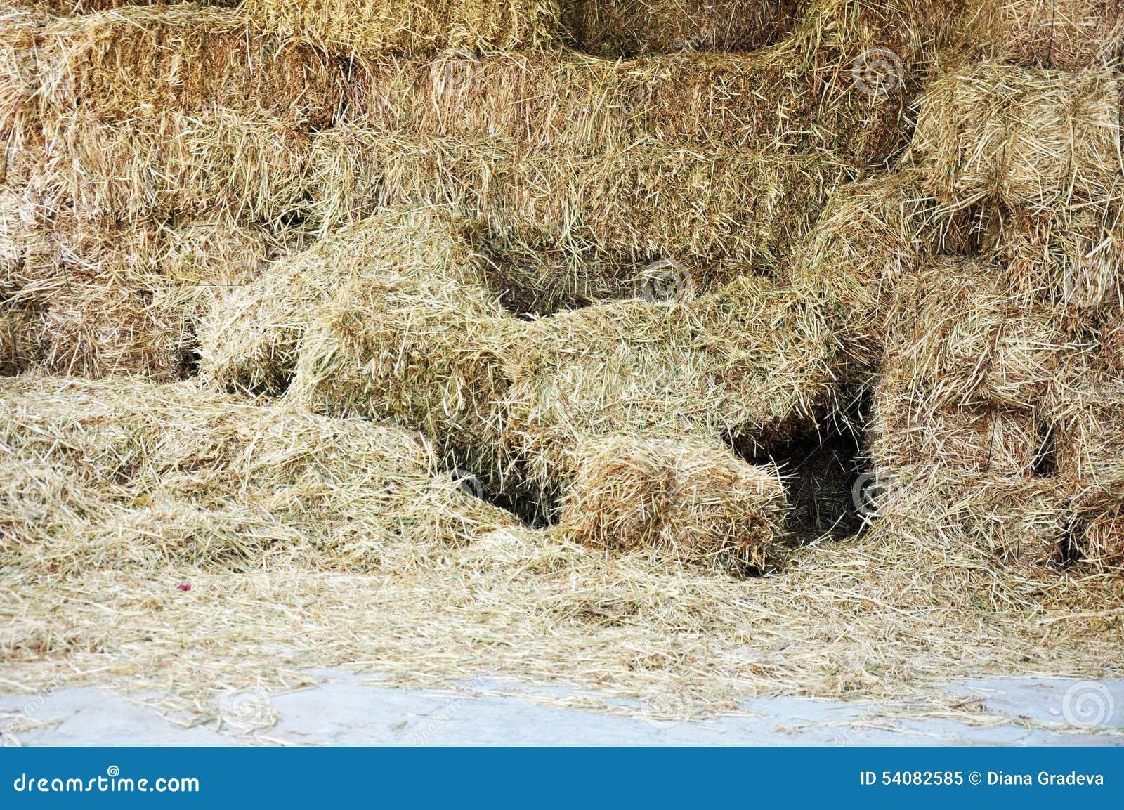 Hay Bales - Voedsel voor Herbivores
