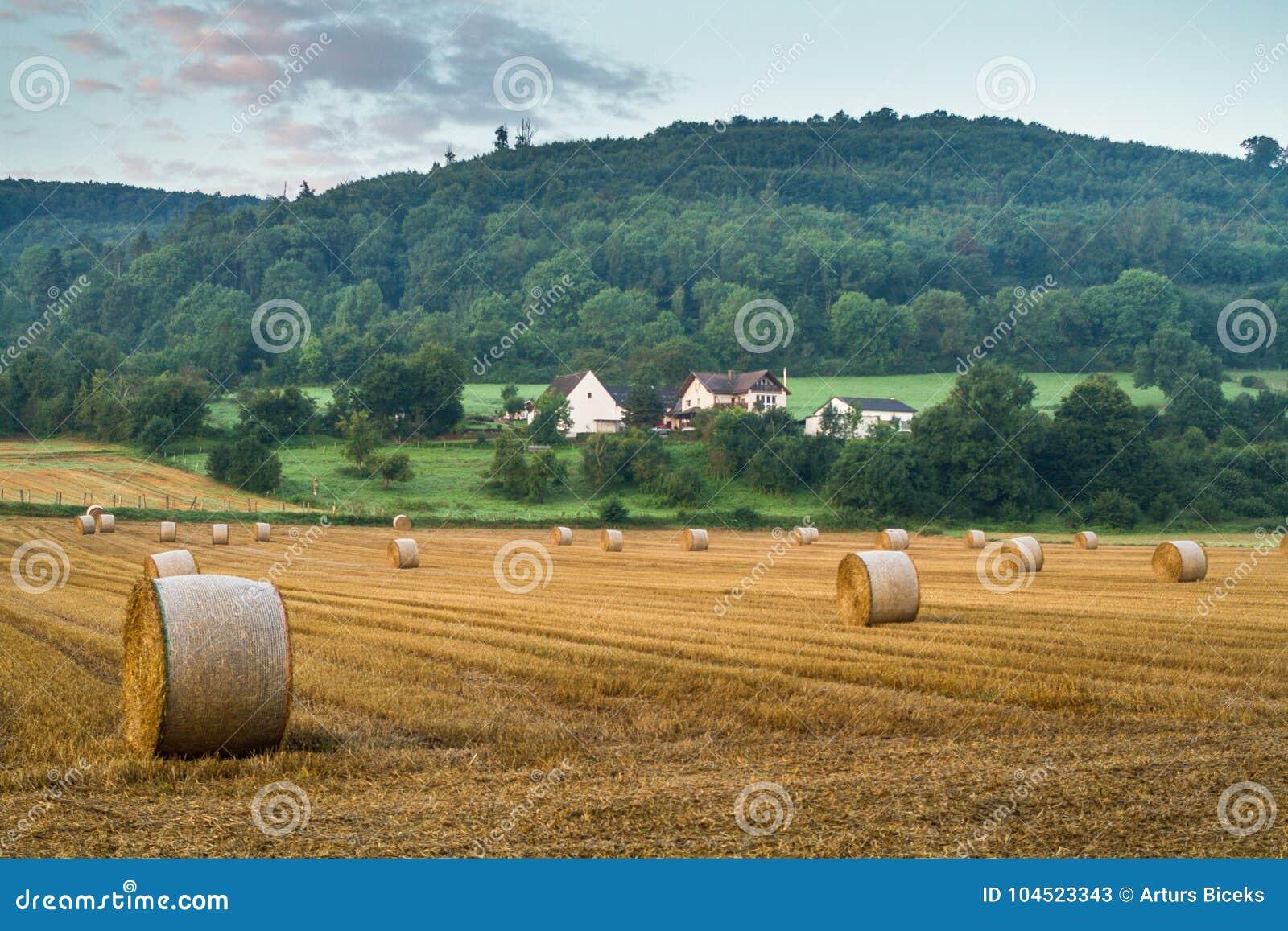 Hay Rolls Stock Image Image Of Background Moss Macro