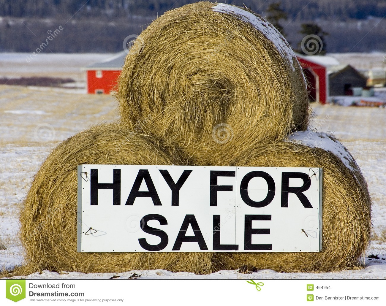 Download Hay for sale stock photo. Image of horse, alberta, horses - 464954