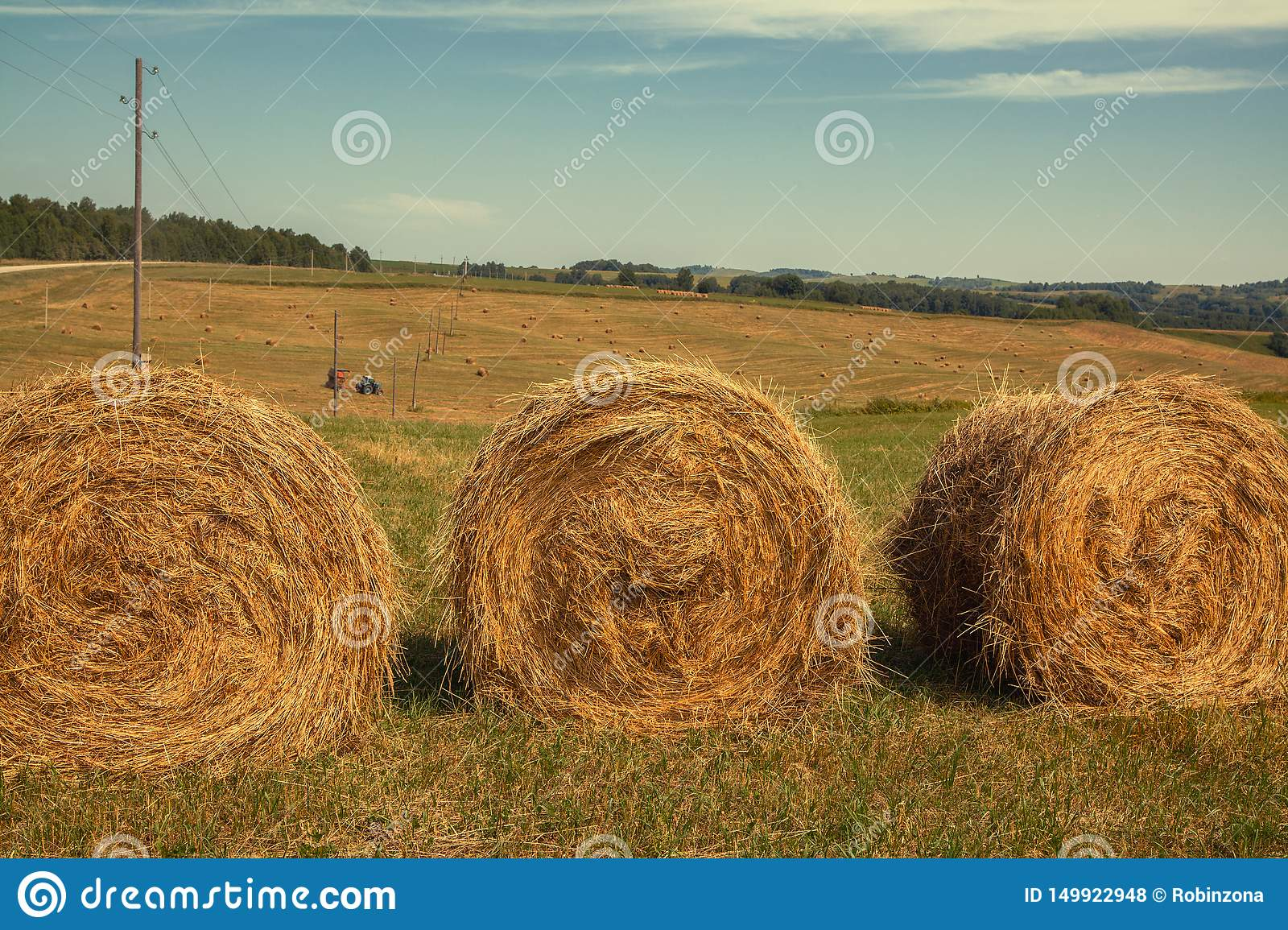 Hayfield. Hay harvesting Sunny autumn landscape. rolls of fresh dry hay in the fields. tractor collects mown grass. fields of