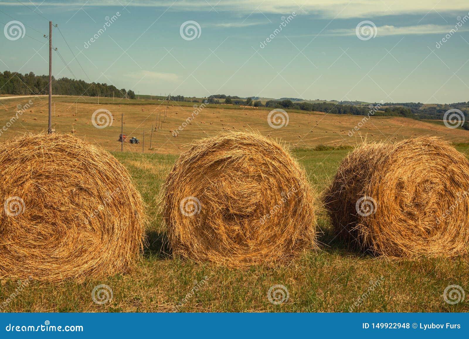 Hayfield Hooi die Zonnig de herfstlandschap oogsten broodjes van vers droog hooi op de gebieden de tractor verzamelt gemaaid gras