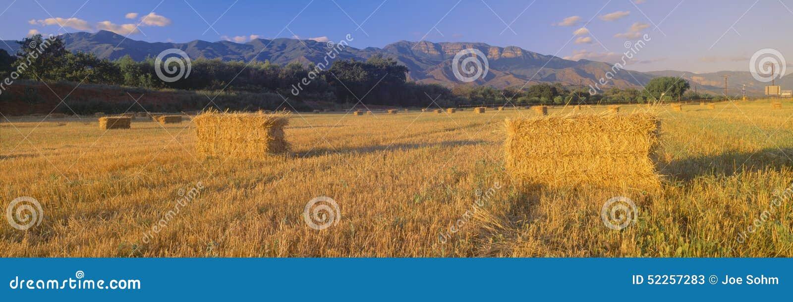 Hayfields w Górnej Ojai dolinie, Kalifornia