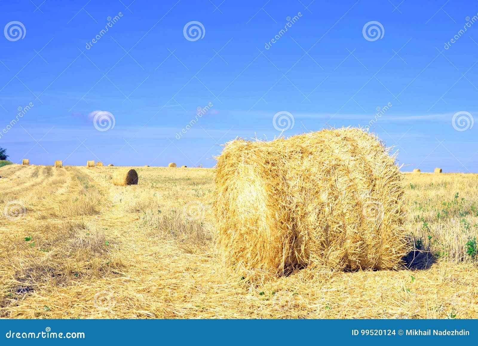 Haymaking, cosechando en los campos