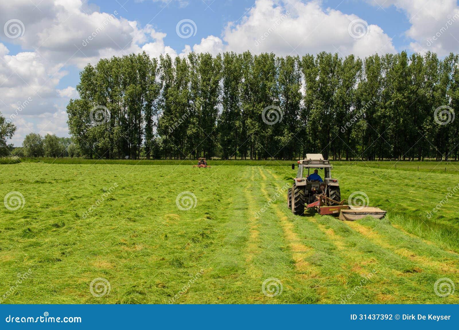 Haymaking tracktors in Flanders field