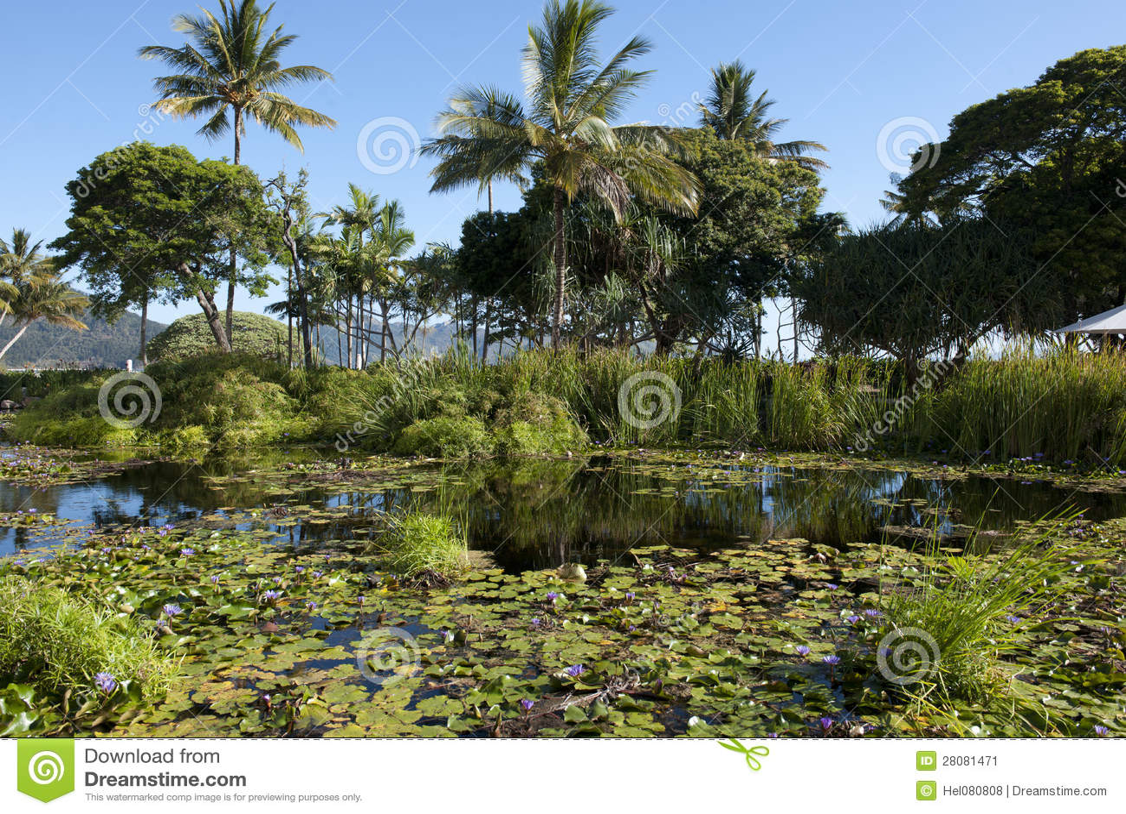 Hayman Island stock image  Image of bloom, landscape - 28081471