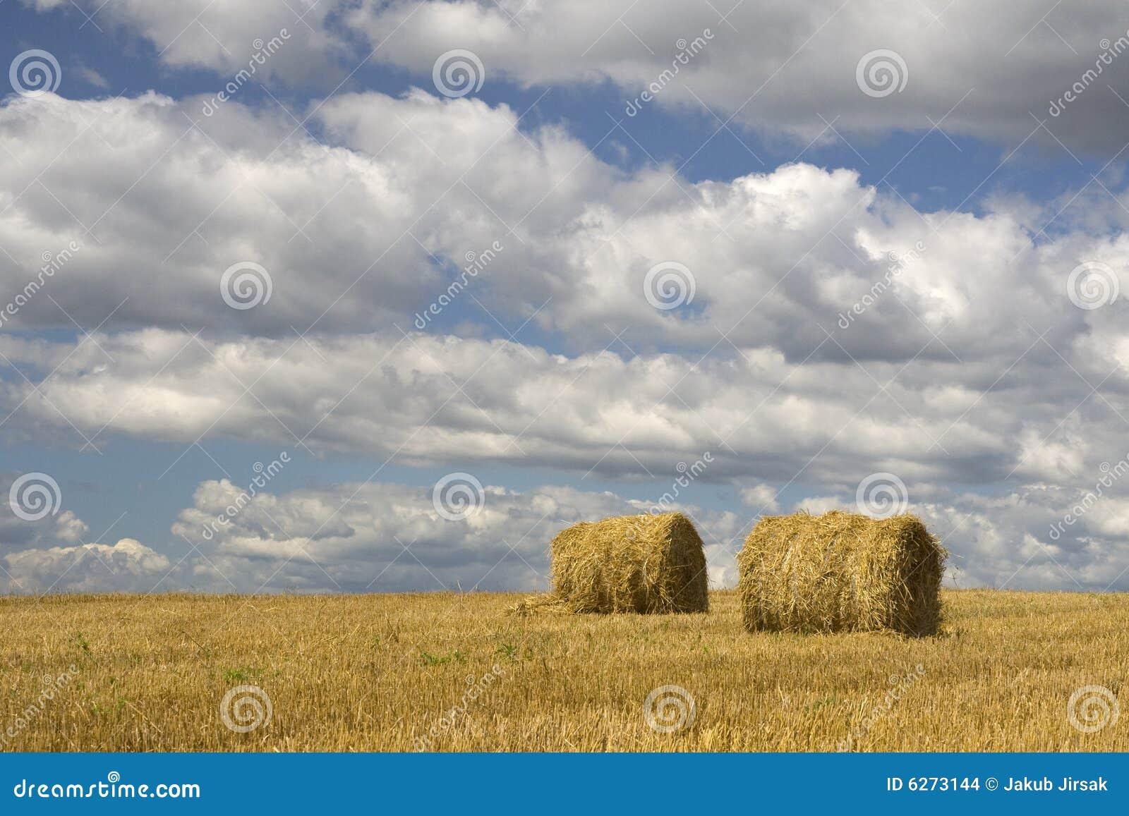 Haystack земледелия