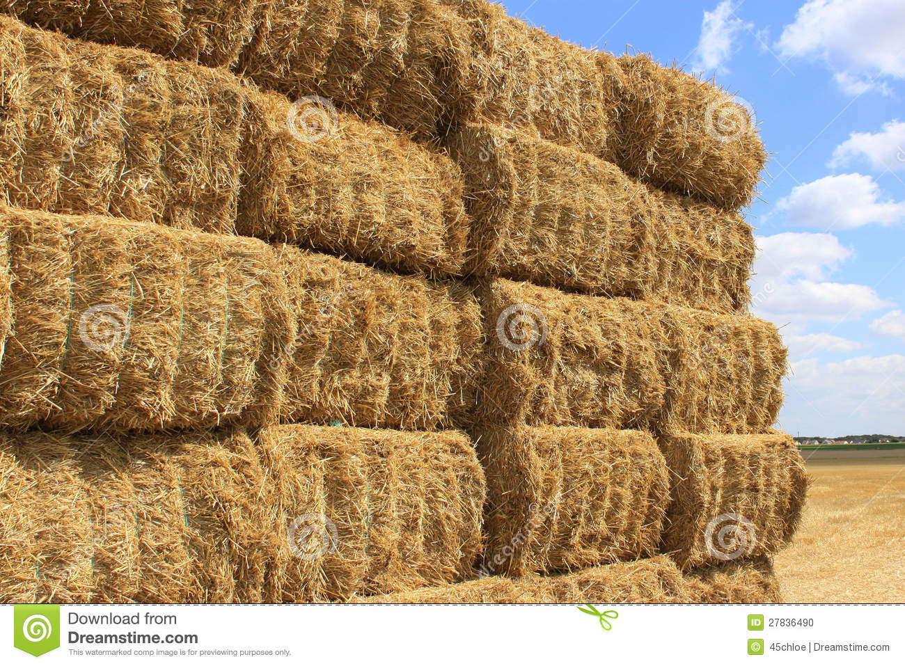Many haystacks piled on a field of wheat.