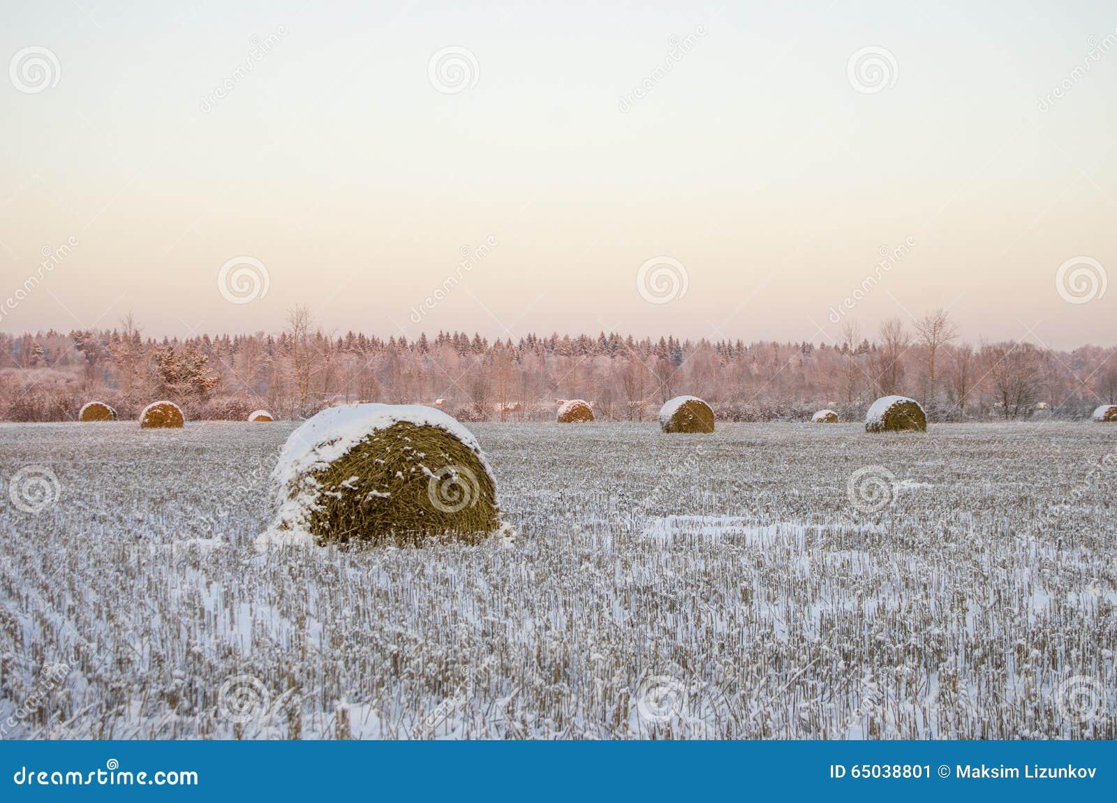 Haystacks en el campo congelado