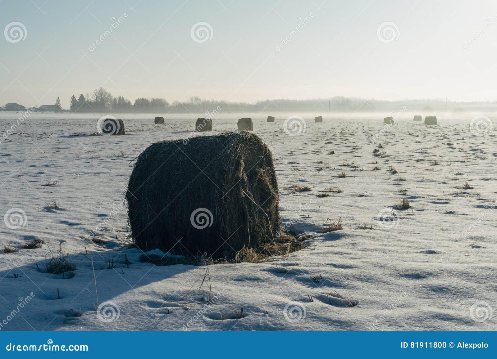 Haystacks i ziemi uprawnej pole zima rankiem