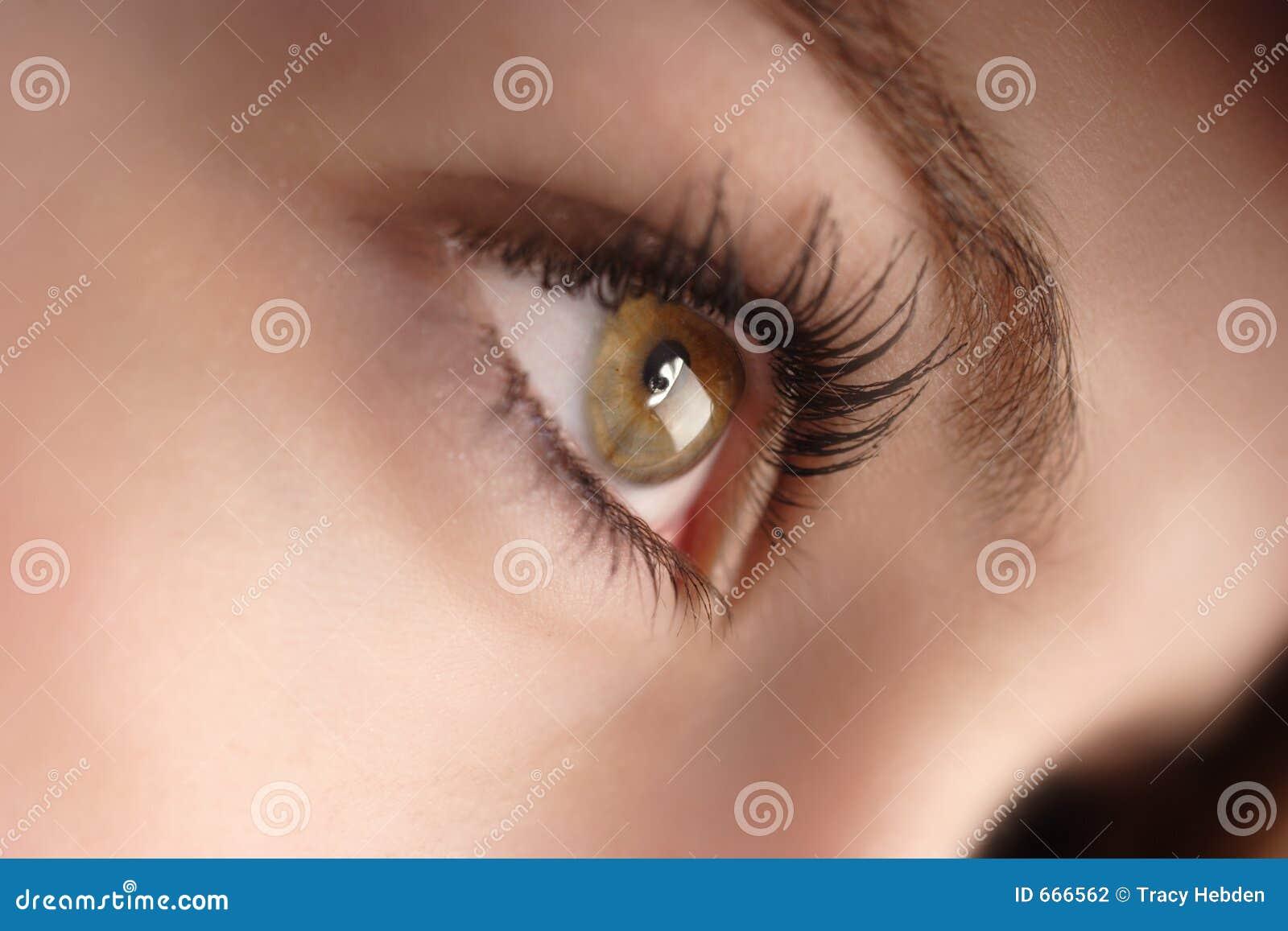hazel eyes stock photography