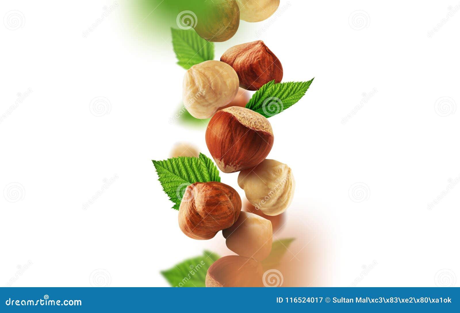 Hazelnuts i liście spada od powietrza