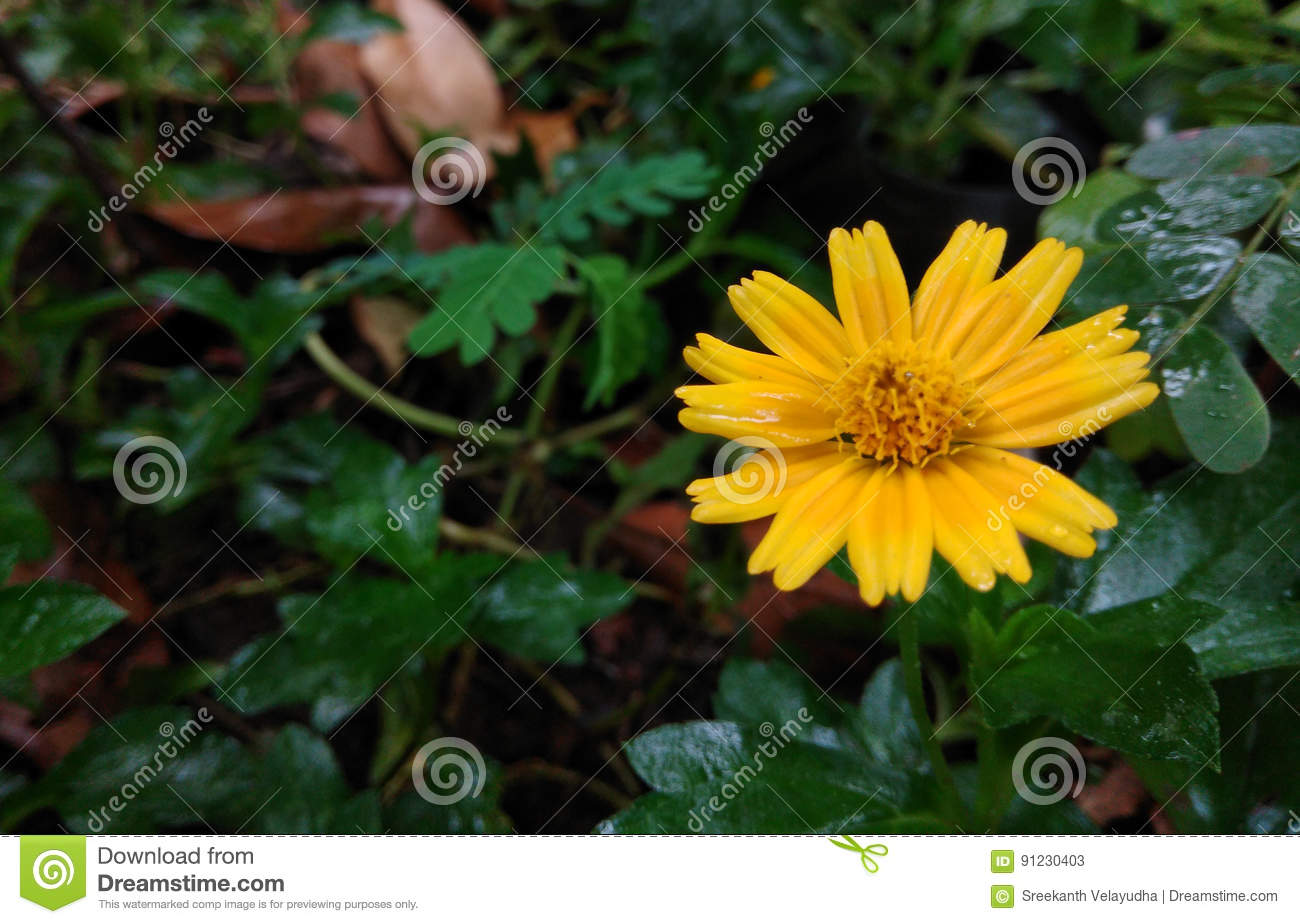 Hd beautiful flowers in the world stock image image of hotel hd beautiful flowers in the world izmirmasajfo