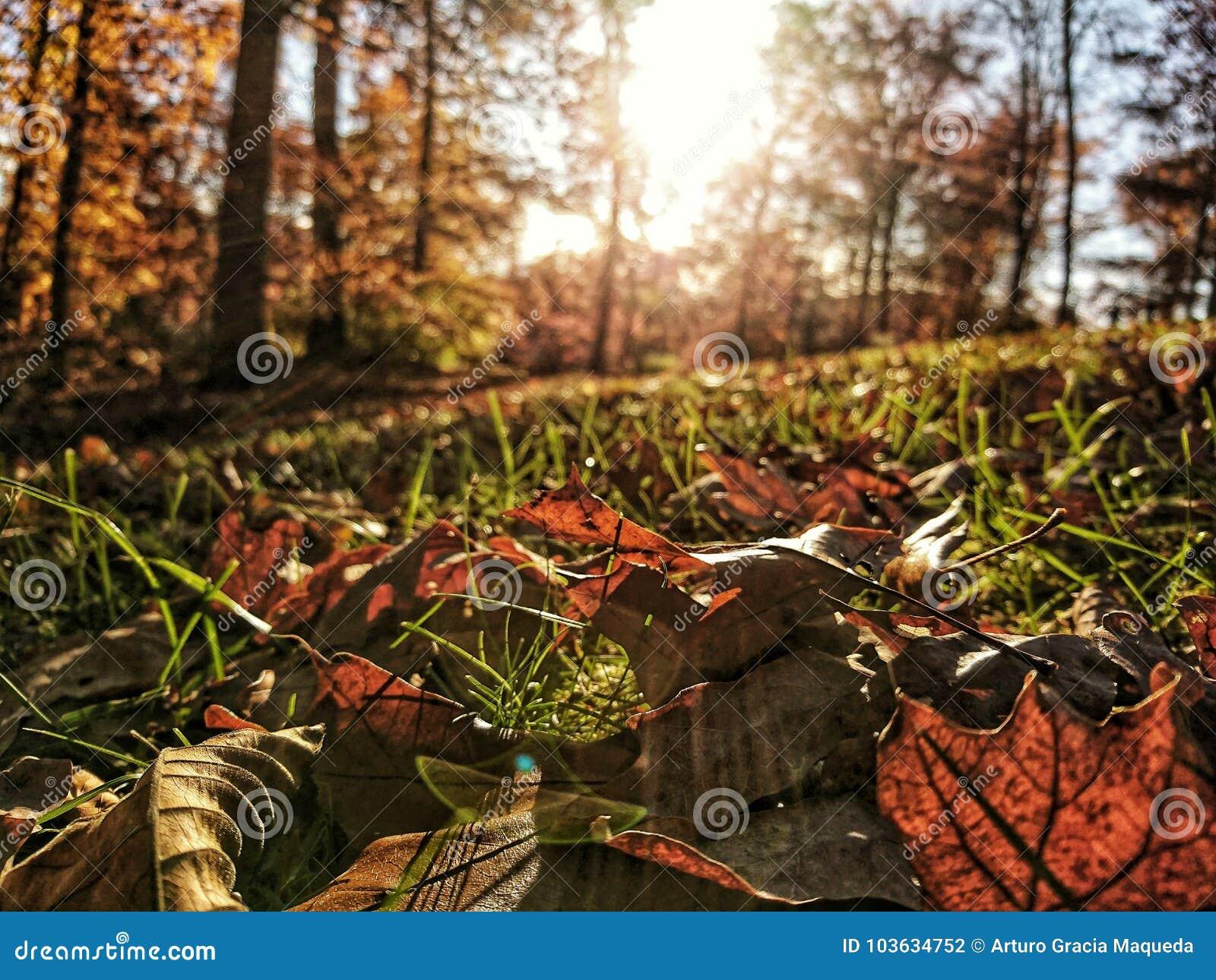 Hdr-Blätter