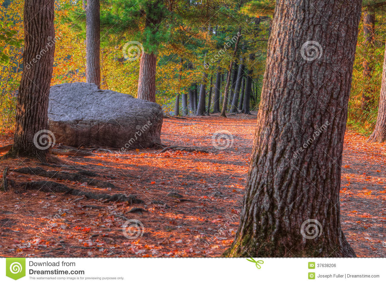 An HDR landscape of a forest and large rock