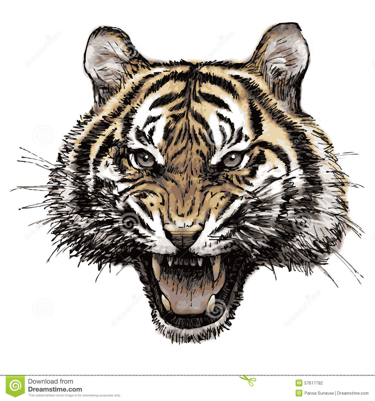head of angry tiger hand drawn stock illustration image