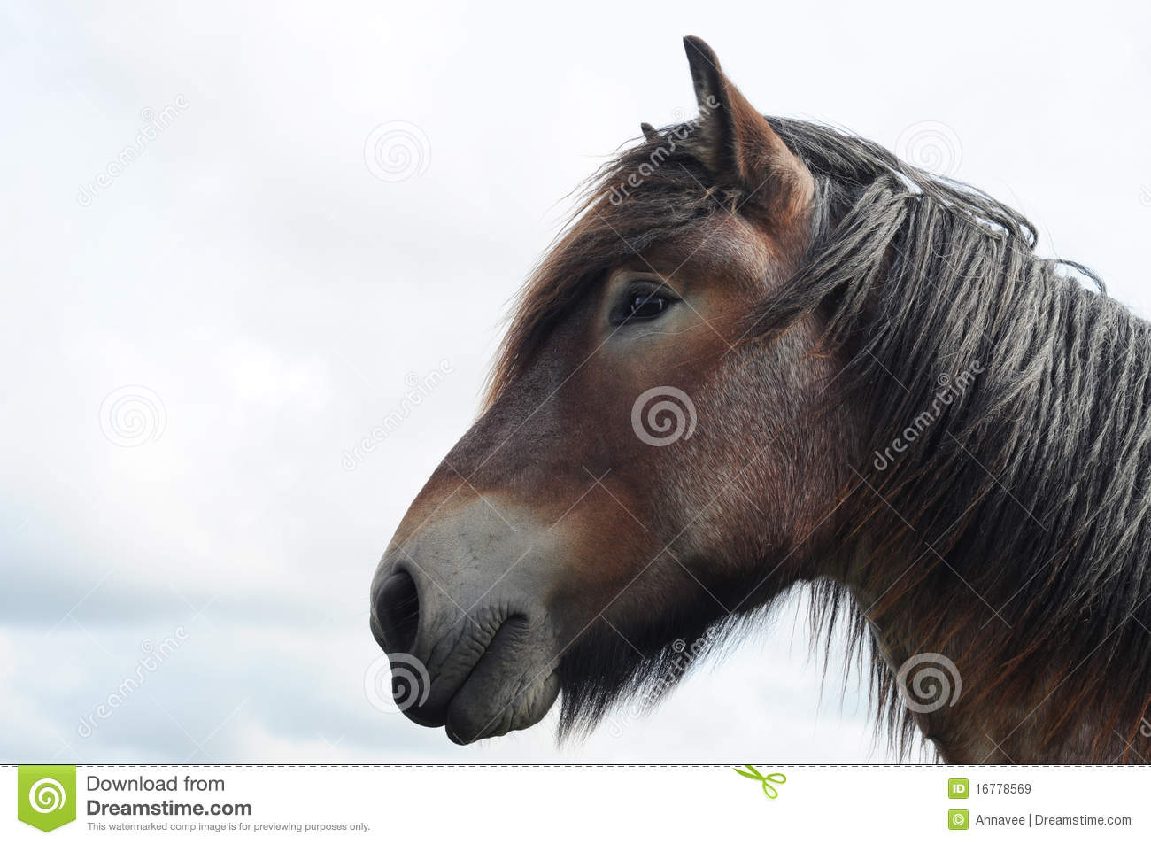 1 656 Draft Horse Head Photos Free Royalty Free Stock Photos From Dreamstime