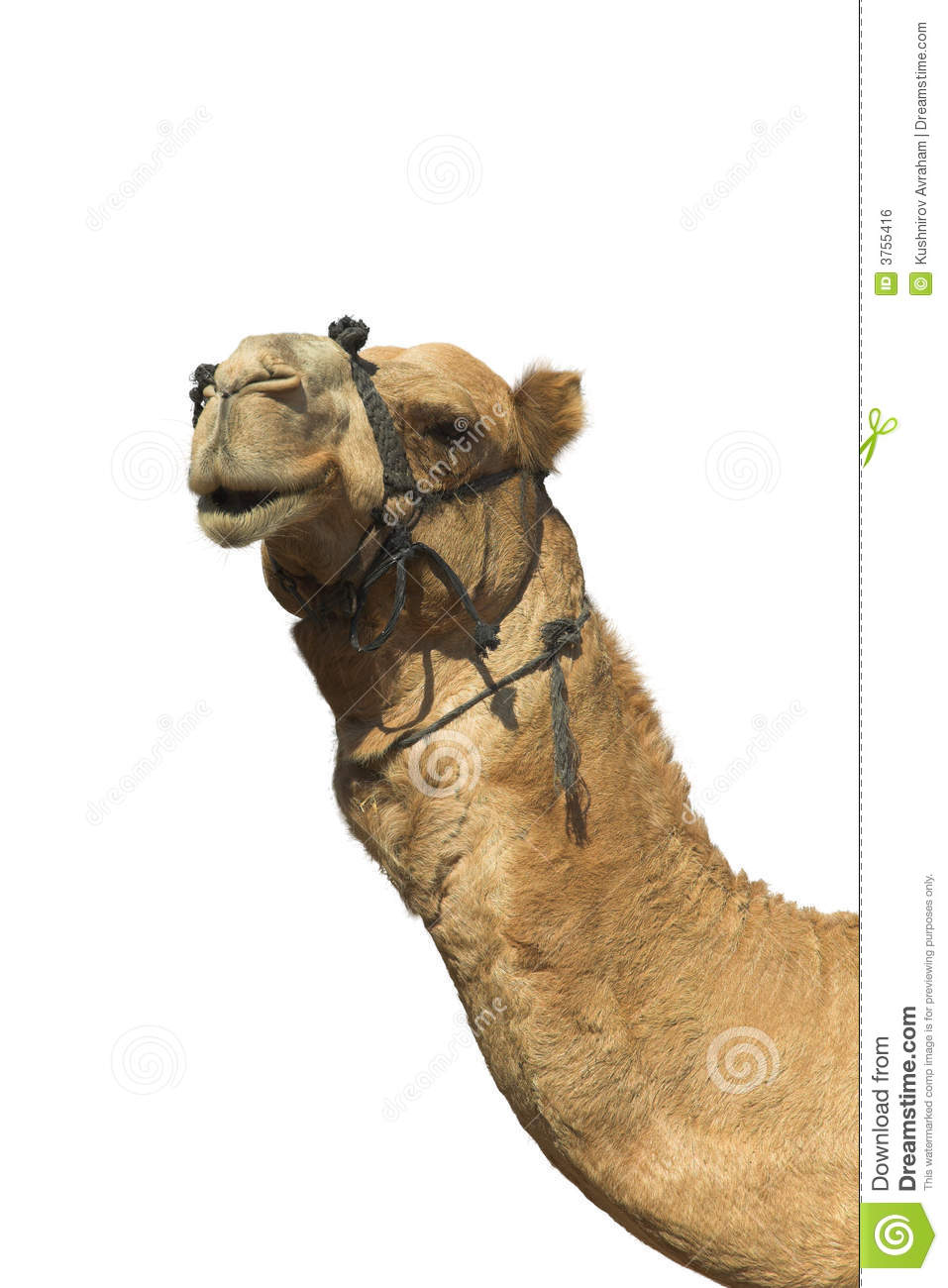 The arterial supply to the head of one-humped camel , Abstract ...