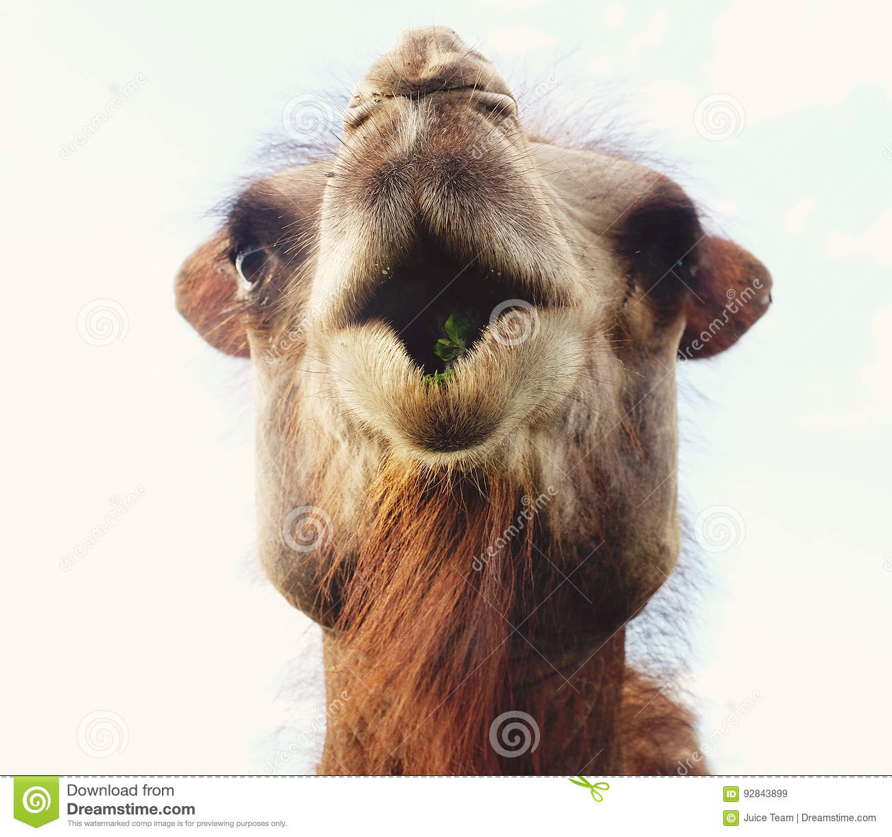 Download Head Of A Camel Against The Sky Stock Image - Image of nature, happy: 92843899