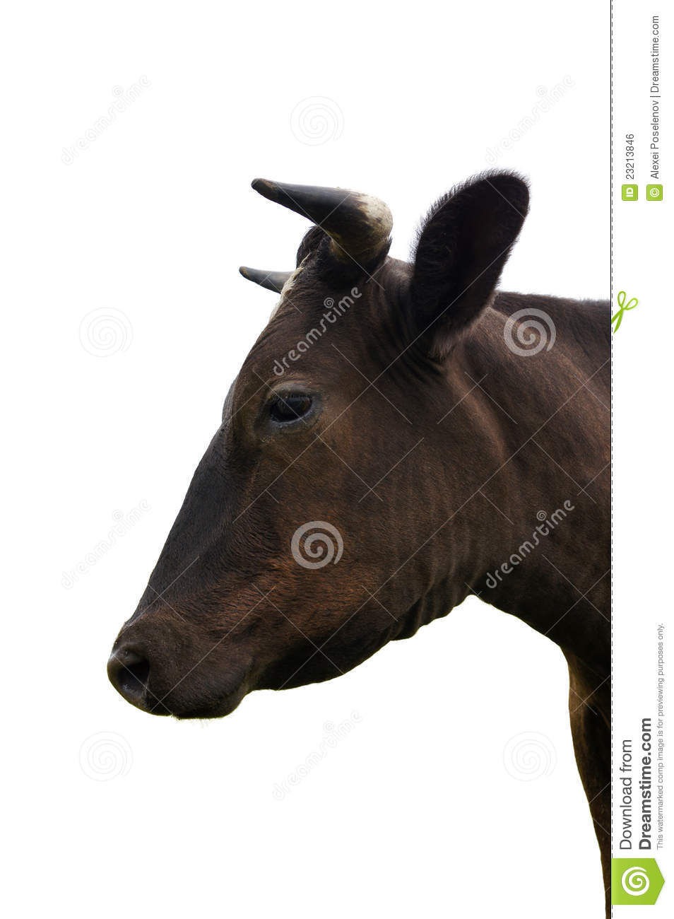The Head Of Cow In The Profile Royalty Free Stock Image ...
