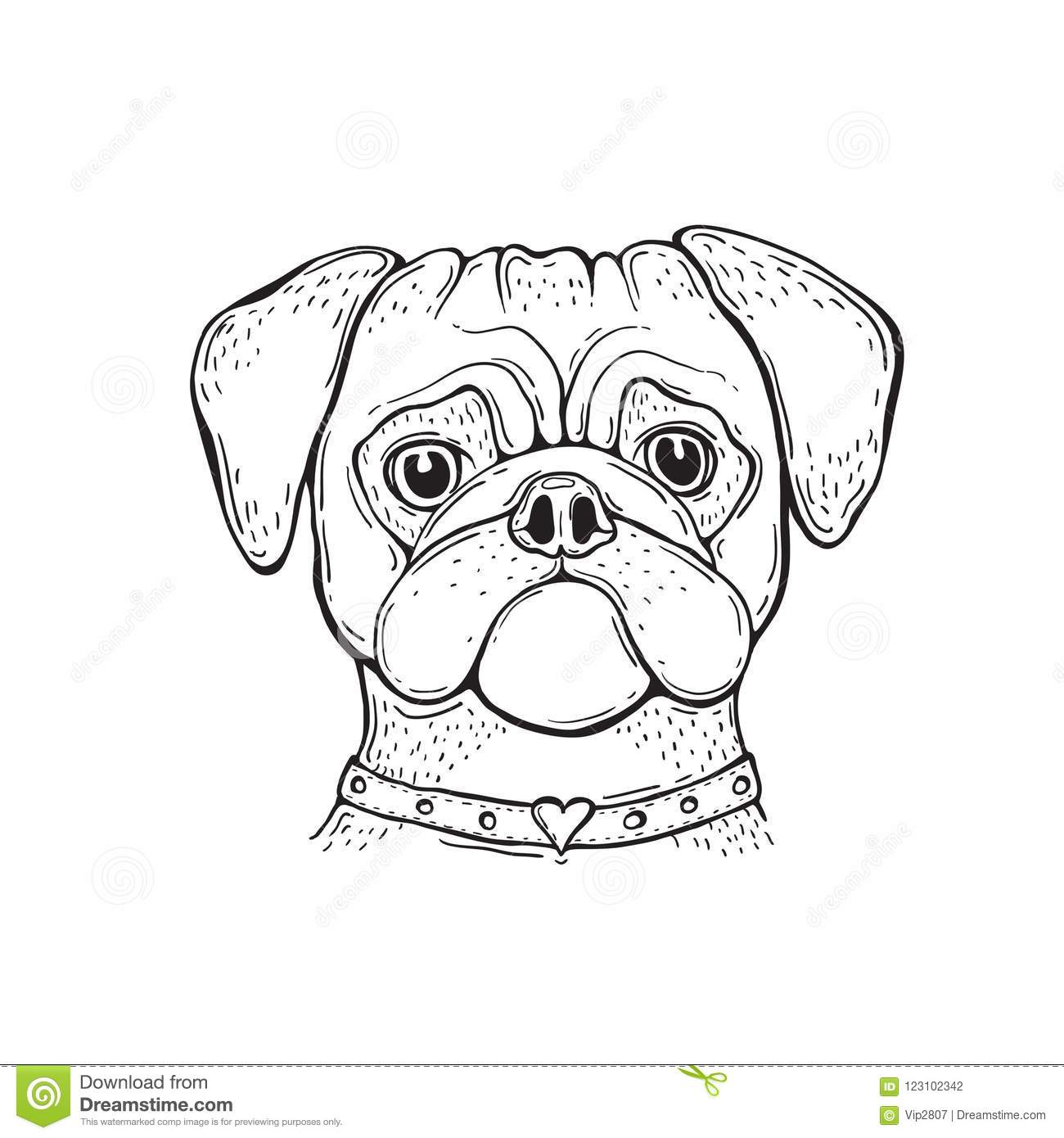 301124a3df2c Head Dog Pug, Hand-painted, Portrait. Black And White. Stock Vector ...
