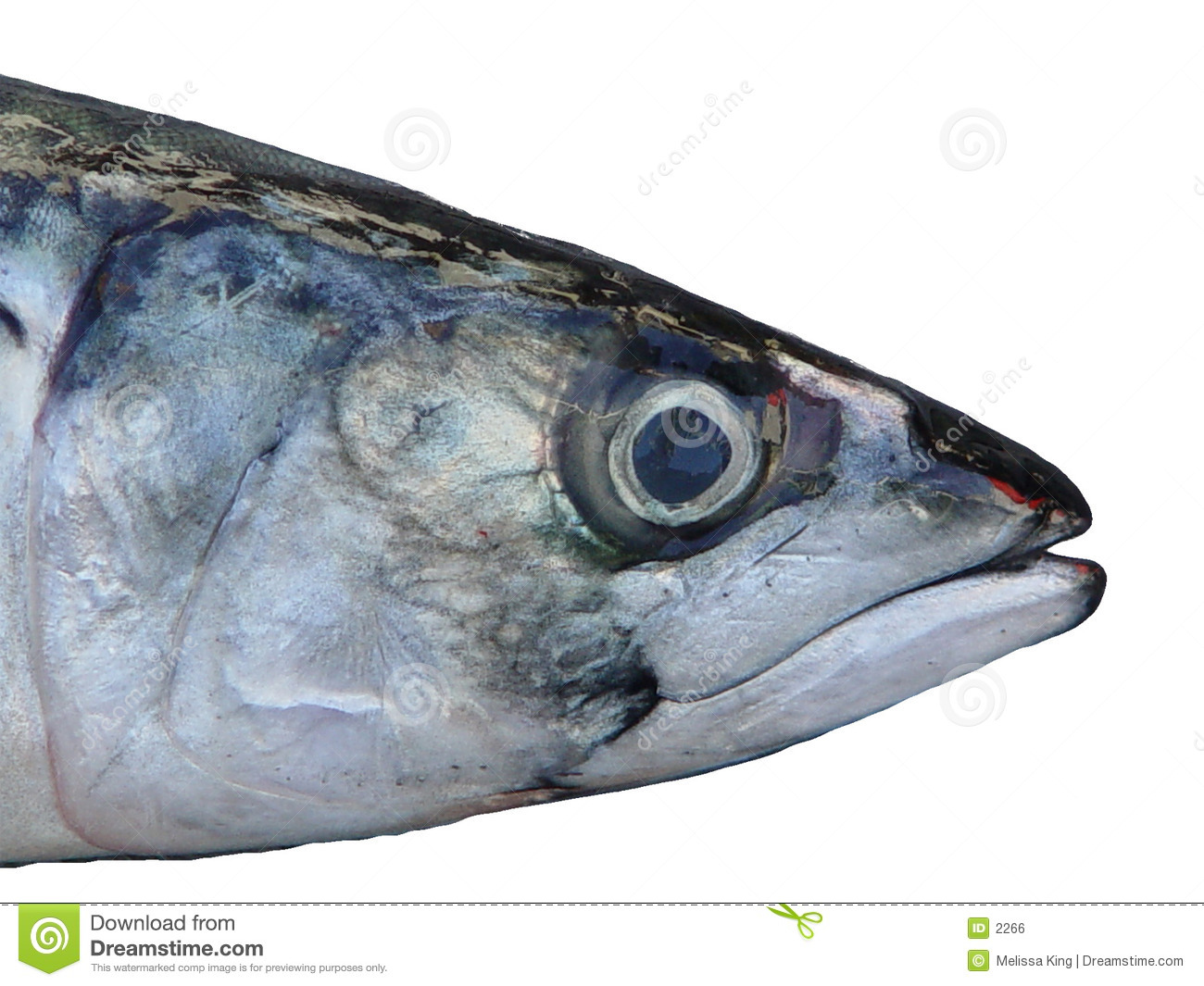 Head of fish stock photo image of objects isolated for Photos of fish