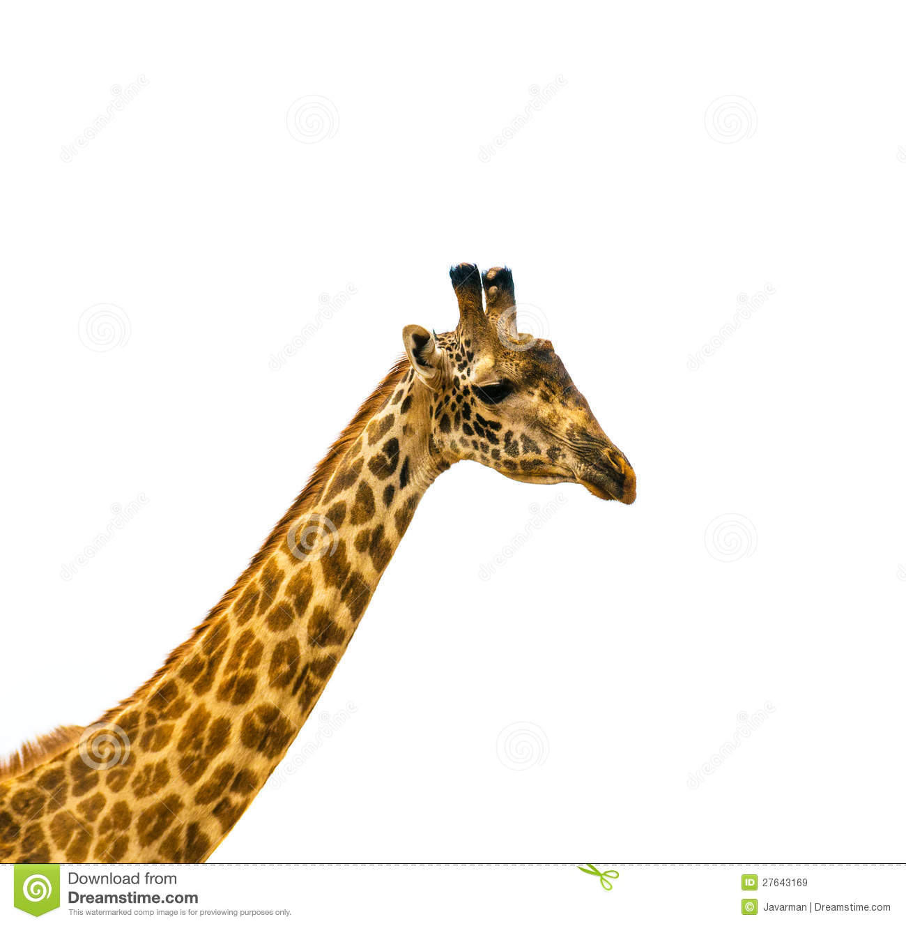 giraffe head white background - photo #22