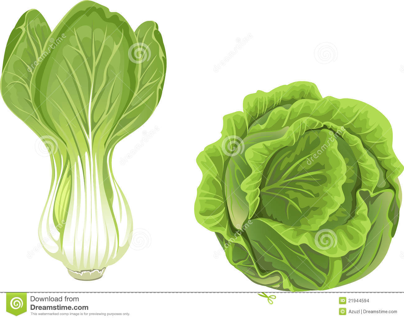 Head of green cabbage ...