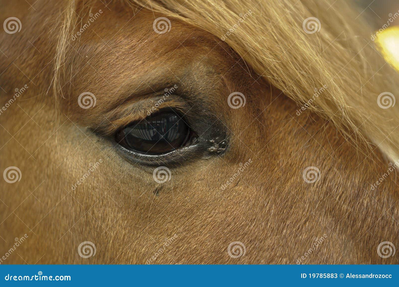 Head häst för detalj
