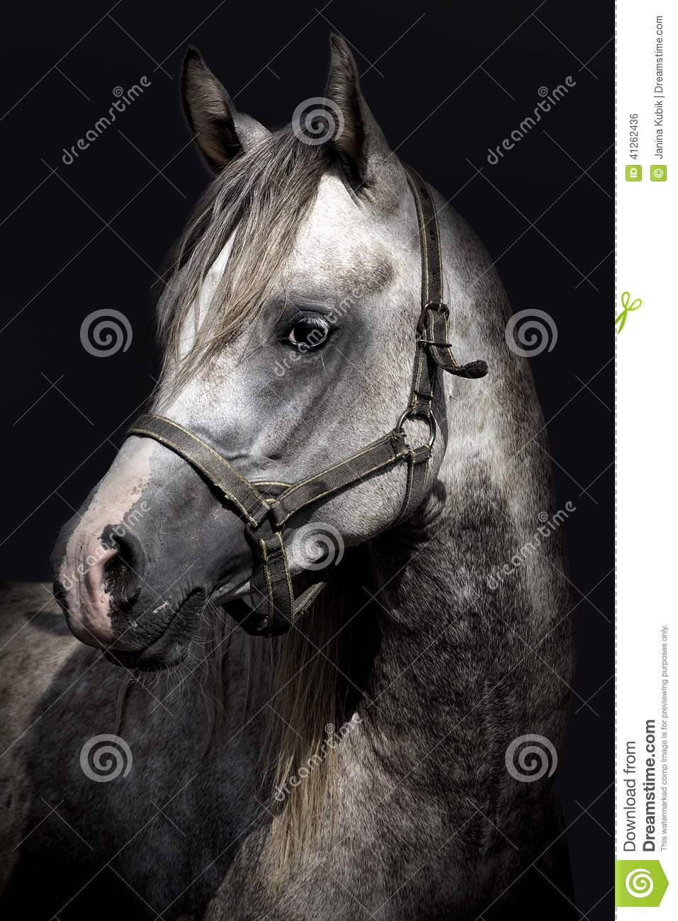 A Head Of A Horse Against A Black Background Stock Photo ...