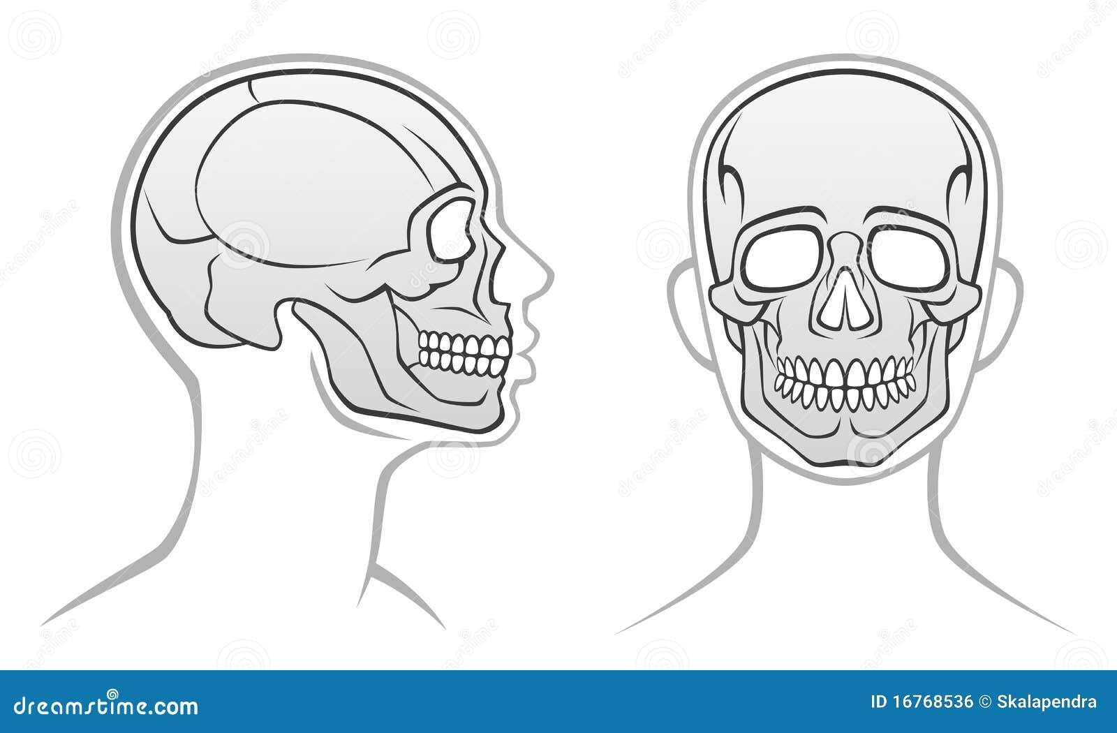 Head human