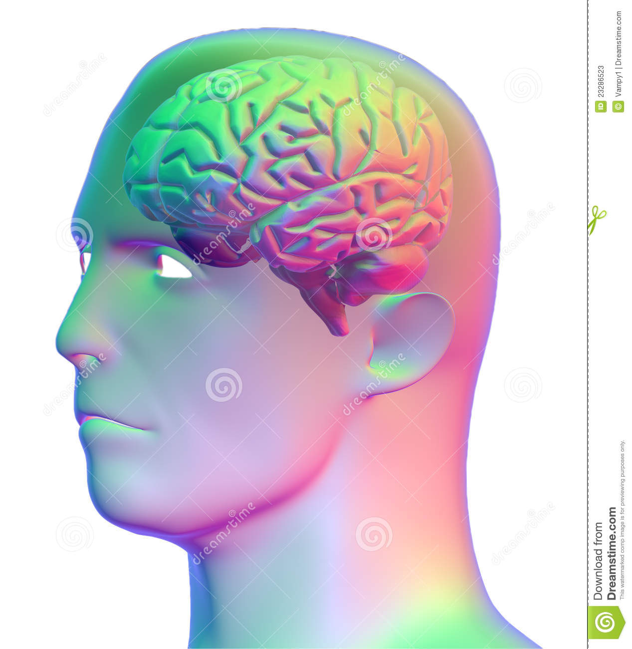 Human head brain / Difference between forex and stock market