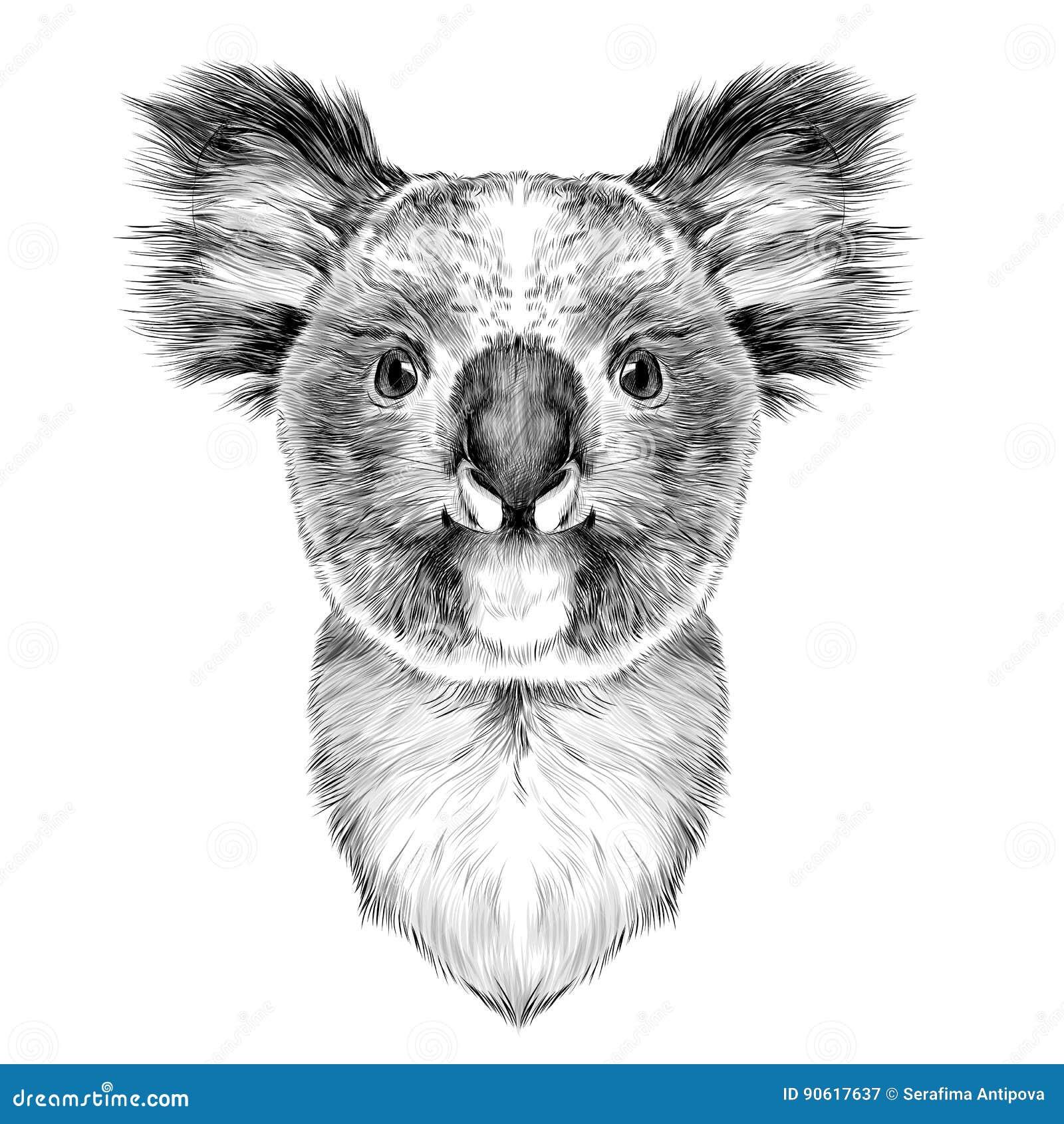 Head Koala stock vector. Illustration of background, black ...