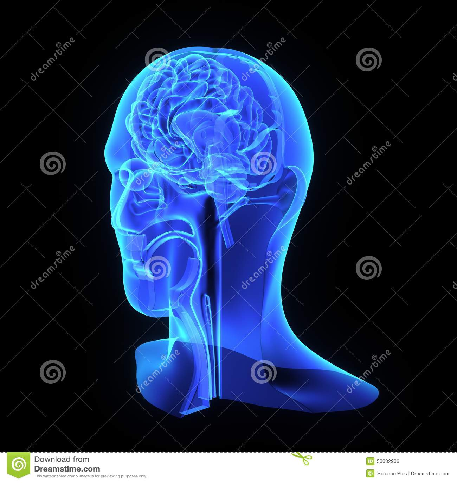 Head and neck anatomy stock illustration. Illustration of head ...