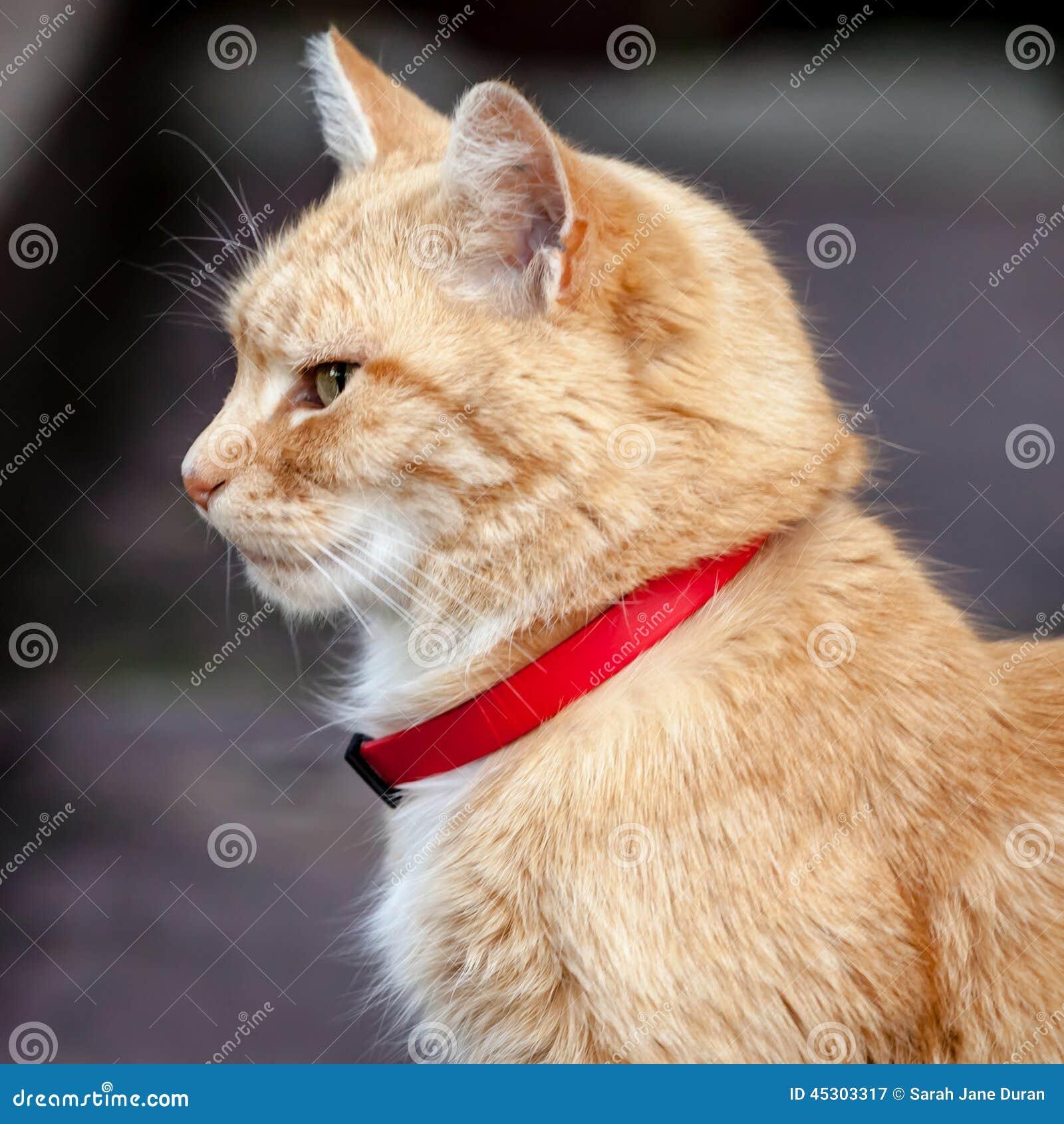 Allen S Ginger Cats